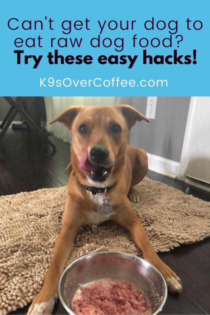 There's a specific reason why your dog doesn't want to eat his raw dog food. Find out why, hacks to fix the problem, and alternatives!