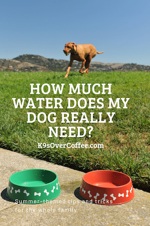 K9sOverCoffee.com | How much water does my dog really need?