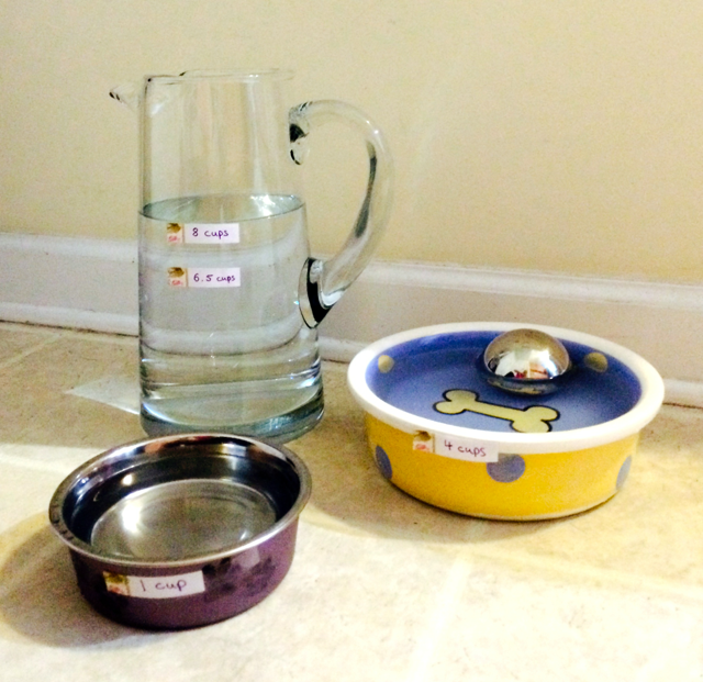 Water_needs_measured_out_for_dogs