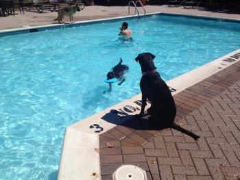 Missy and Buzz in the pool