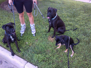 rsz_rollerblading_w_puppies