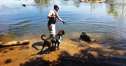Ian hiking with our dogs and letting them cool off in a stream