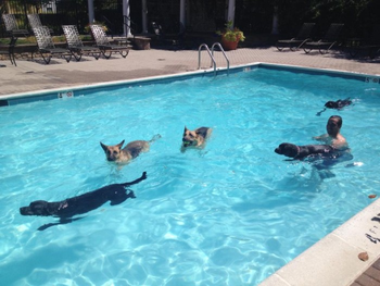 K9sOverCoffee | Missy & Buzz Swimming With K9 Friends