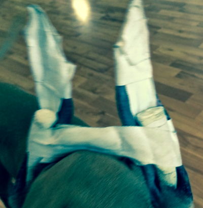 Healing cropped dog ears