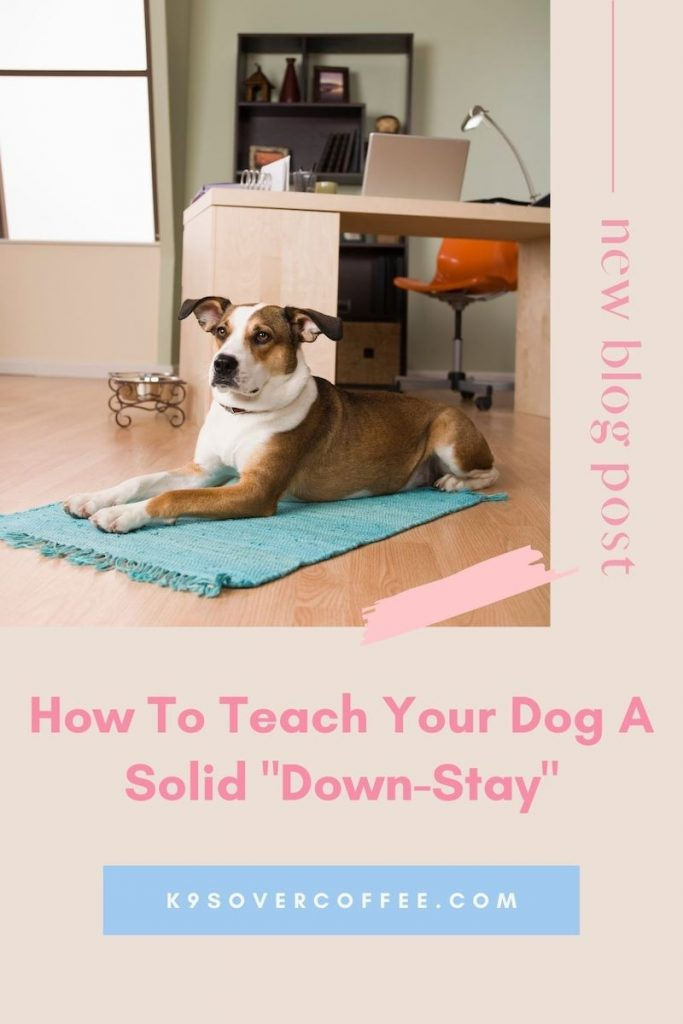 K9sOverCoffee.com | How to teach your dog a solid down-stay