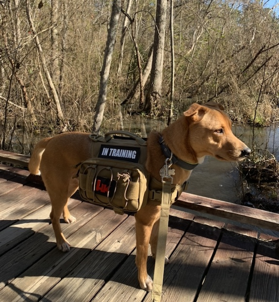 K9sOverCoffee.com | Wally on a walk with his dog backpack from One Tigris