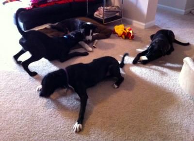 Socializing_dogs