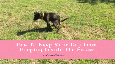 How To Keep Your Dog From Pooping Inside The House