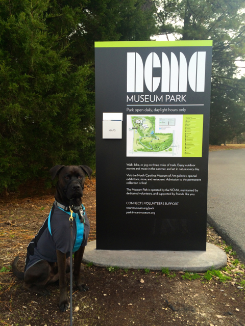 Buzz at the NCMA Museum Park