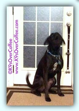 rsz_black_boxerdog_barking_at_backdoor