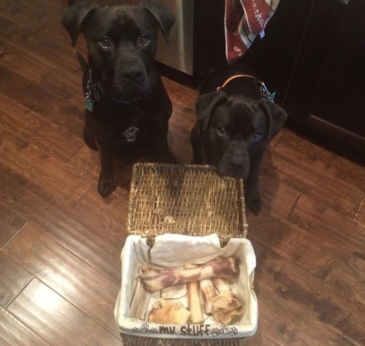 K9sOverCoffee | How To Cope With A Fractured Dog Tooth - Saying Goodbye To Their Antler & Bone Collection