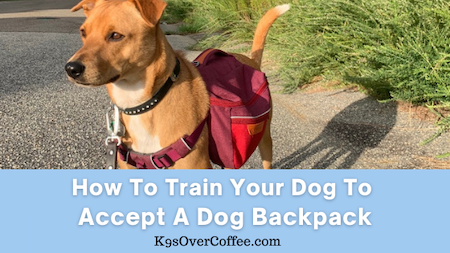 K9sOverCoffee | How to train your dog to accept a dog backpack