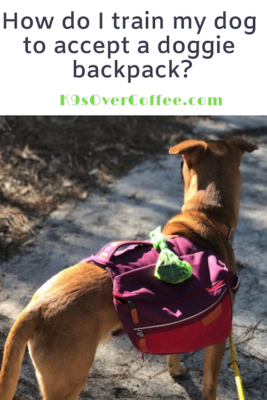 K9sOverCoffee.com | How do I train my dog to accept a doggie backpack?