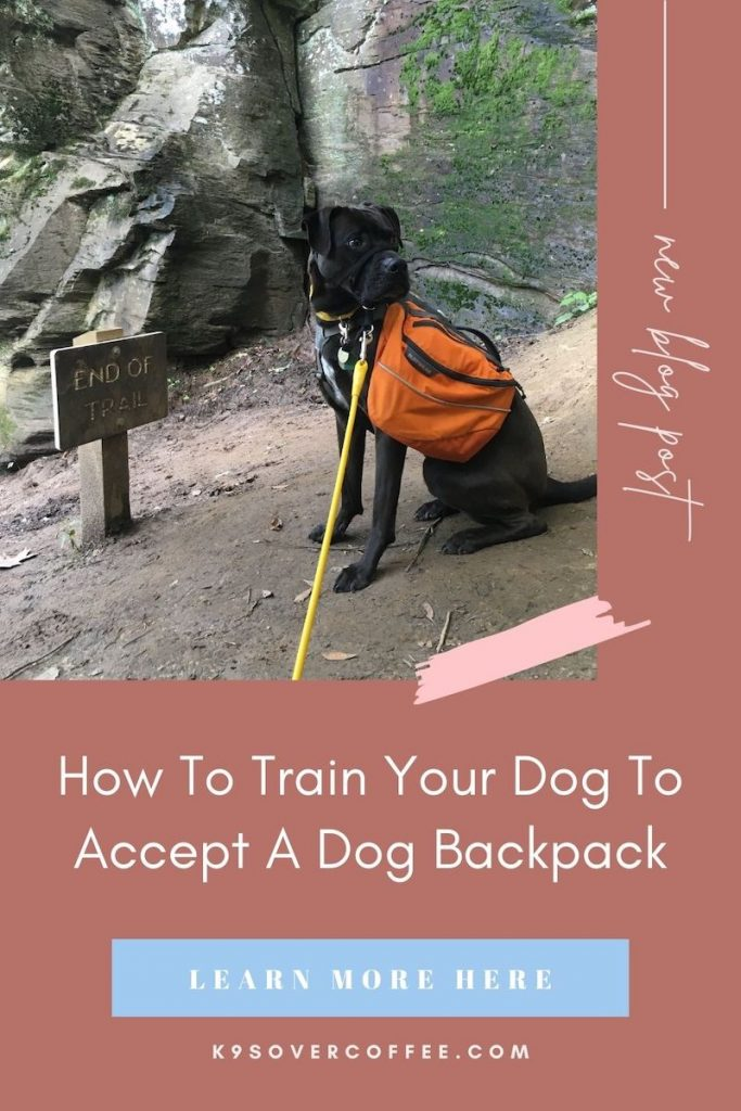 K9sOverCoffee.com | How to train your dog to accept a dog backpack