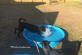 Buzz_pool_2