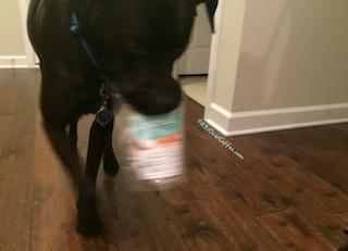 K9sOverCoffee.com | Buzz steals the Coconut Smiles organic dog treats