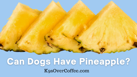 K9sOverCoffee | Can Dogs Have Pineapple?