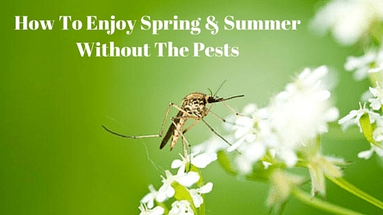 How To Enjoy Spring & Summer Without The Pests