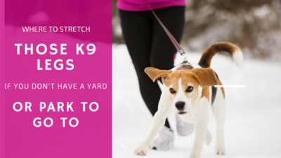 Where To Sretch Those K9s Legs If You Don't Have A Year Or Park To Go To
