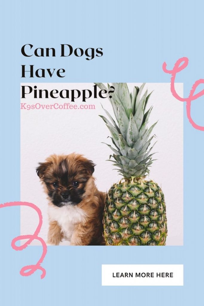 K9sOverCoffee.com | Can Dogs Have Pineapple?