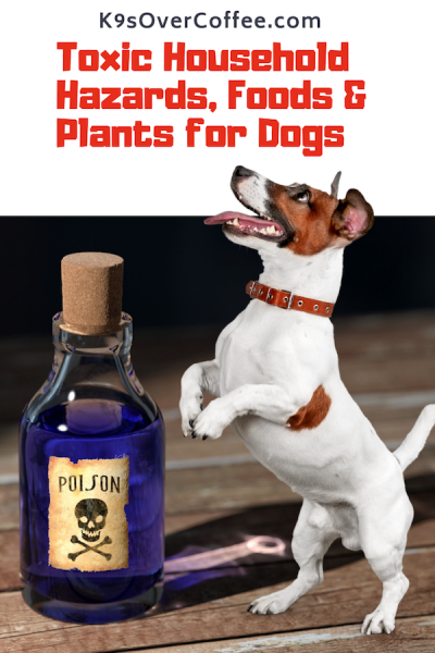 K9sOverCoffee.com | Toxic Household Hazards, Foods & Plants for Dogs