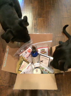 K9sOverCoffee.com | Missy & Buzz with their goodie package from Dr. Harvey's