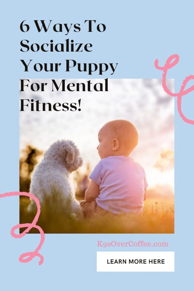 K9sOverCoffee.com | 6 Ways to socialize your puppy for mental fitness