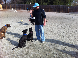 rsz_practicing_commands_at_dogpark