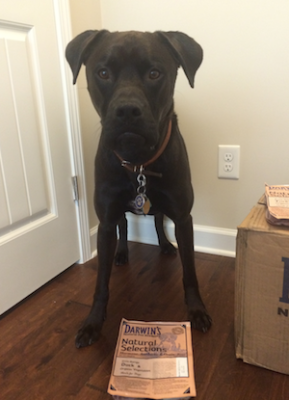 Buzz posing with Darwin's Natural Pet Food