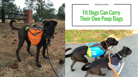 K9sOverCoffee | Fit Dogs Can Carry Their Own Poop Bags