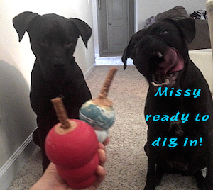 Missy ready to dig into KONG toy