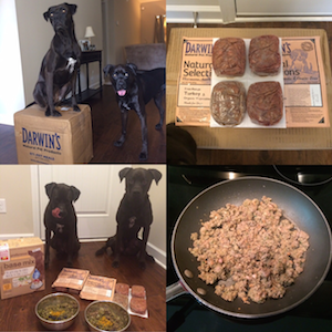 Darwin's Raw Dog Food