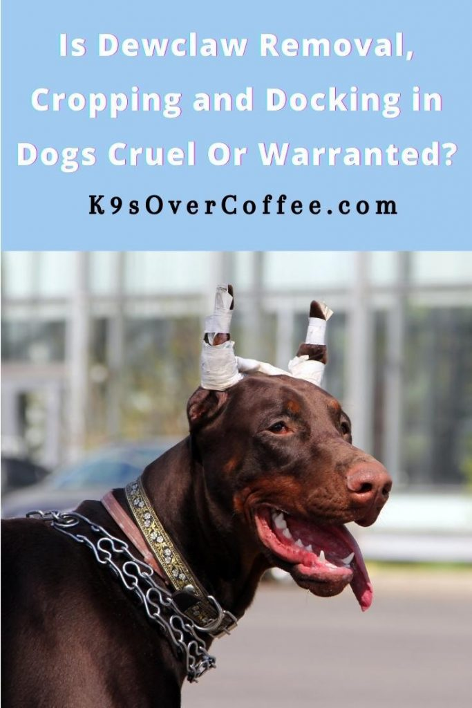 K9sOverCoffee.com | Is Dewclaw Removal, Cropping and Docking In Dogs Cruel Or Warranted?