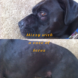 Missy with a case of hives