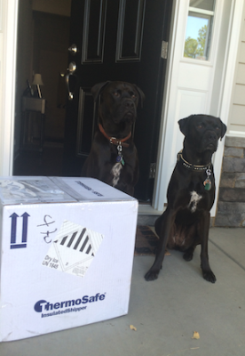 Missy and Buzz are excited about their shipment of green tripe from Raw Paws Pet Food