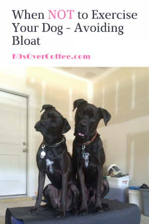 K9sOverCoffee.com | When NOT to exercise your dog - Avoiding Bloat