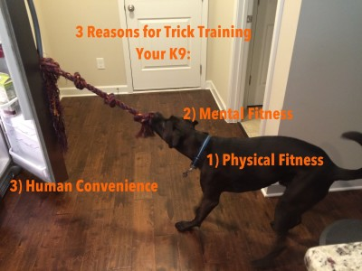 3 Reasons for Trick Training Your K9