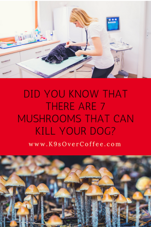 Dangerous mushrooms for dogs: These 7 can kill your dog
