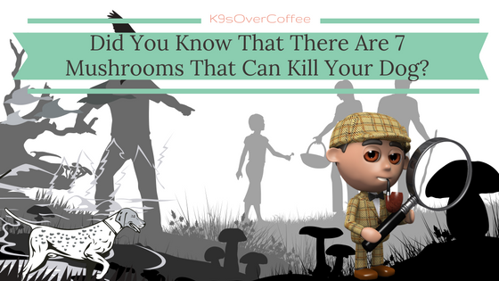 Did You Know That There Are 7 Mushrooms Than Can Kill Your Dog?