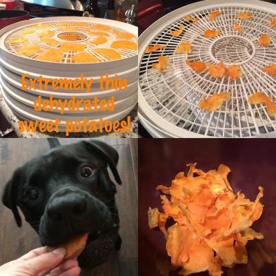 Thin dehydrated sweet potato dog treats