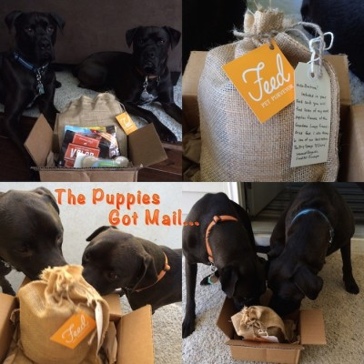 Missy & Buzz got mail from FeedPetPurveyor