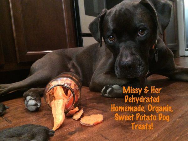K9sOverCoffee | Missy & Her Dehydrated, Homemade, Organic, Sweet Potato Dog Treats!