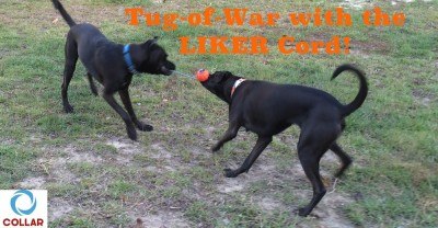 Tug-of-War with the LIKER Cord!