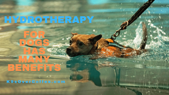 K9sOverCoffee | Hydrotherapy for dogs has many benefits
