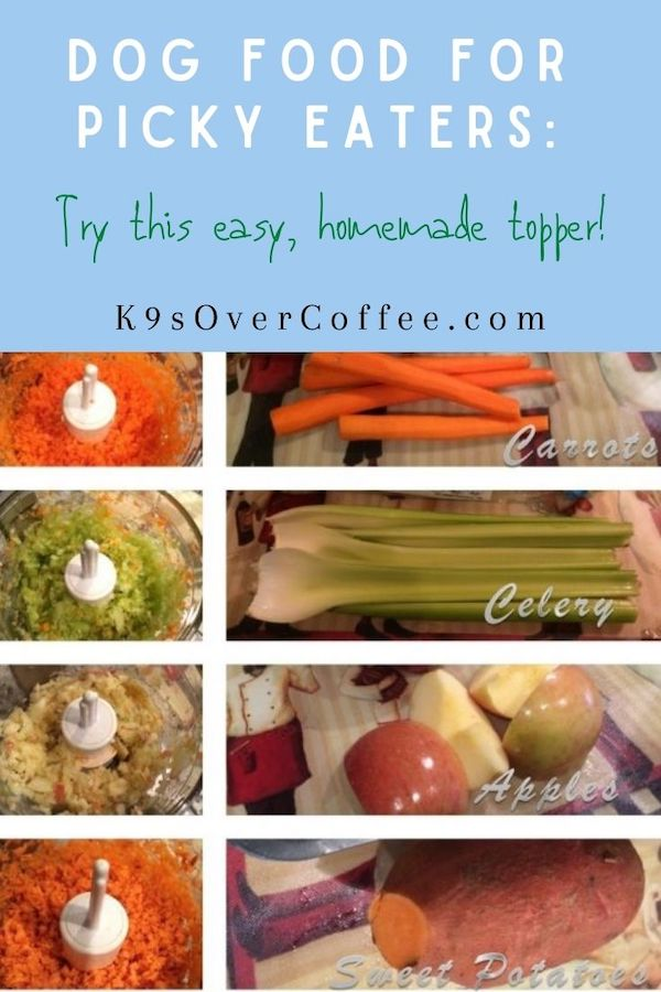 K9sOverCoffee.com | Dog Food For Picky Eaters: Try This Easy, Homemade Topper!