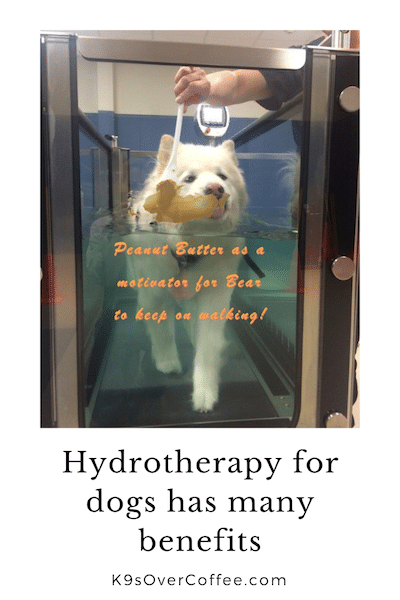 K9sOverCoffee.com | Hydrotherapy for dogs has many benefits