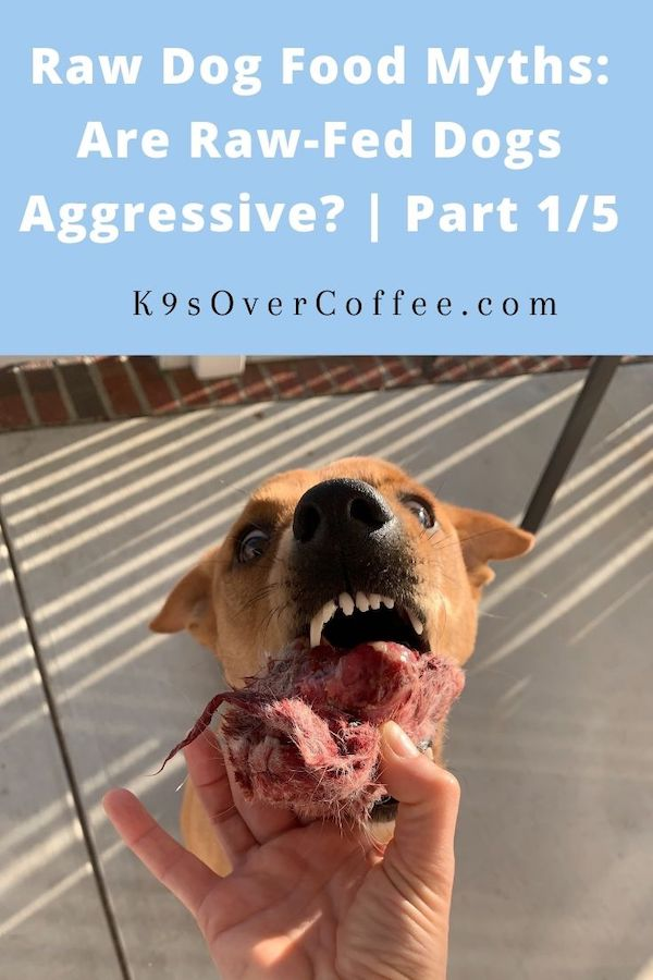 K9sOverCoffee.com | Raw Dog Food Myths: Are Raw-Fed Dogs Aggressive? | Part 1/5