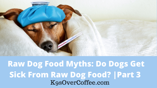 K9sOverCoffee | Raw Dog Food Myths: Do Dogs Get Sick From Raw Dog Food? | Part 3