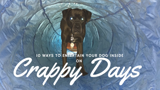 K9sOverCoffee | 10 Ways To Entertain Your Dog Inside on Crappy Days
