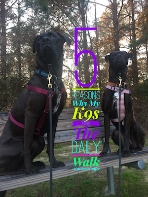 5 Reasons Why My K9s Walk The Daily Walk